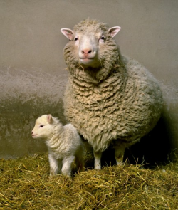 Dolly the sheep with her first-born, Bonnie. Image courtesy of The Roslin Institute